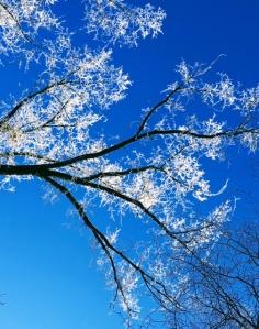 hoar-frost-on-119-st